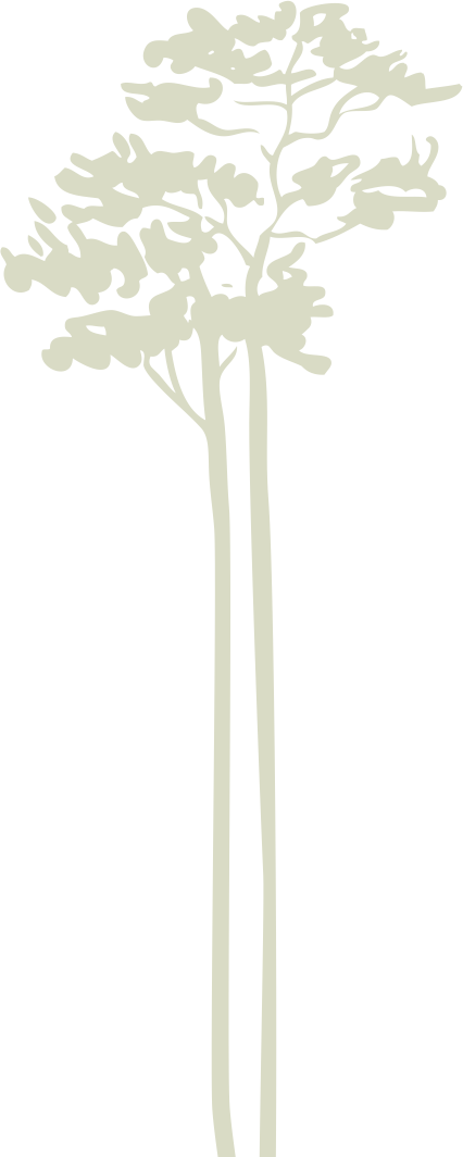 drzewo10