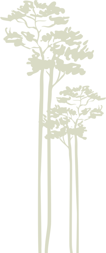 drzewo11