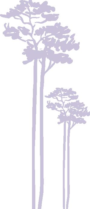 drzewo8